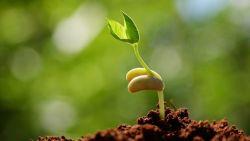 تفسير حلم الزراعة في المنام للرجل الأعزب