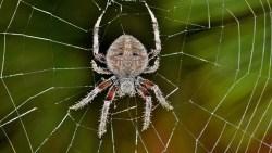 تفسير حلم العنكبوت في المنام للنابلسي