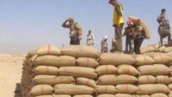 تفسير حلم سرقة القمح في المنام