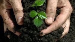 تفسير حلم الزراعة في المنام لابن سيرين
