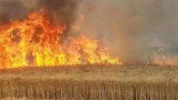 تفسير حلم حرق القمح في المنام