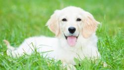 تفسير حلم الكلب في المنام لابن شاهين