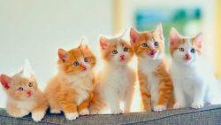 اسماء قطط ذكور واناث