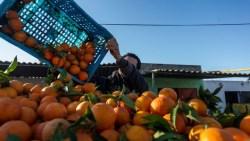 تفسير حلم سرقة البرتقال في المنام