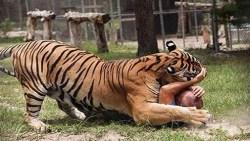تفسير حلم النمر يأكلني في المنام