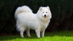 تفسير حلم الكلب الأبيض في المنام