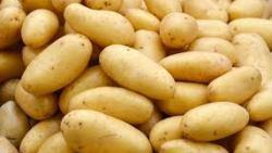 تفسير حلم رؤية البطاطس في المنام