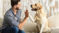 تفسير رؤية حلم ممازحة الكلب في المنام