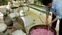 تفسير حلم صنع ماء الزهر في المنام