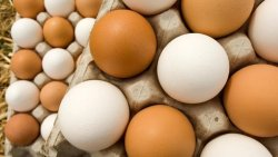 تفسير حلم توزيع البيض في المنام