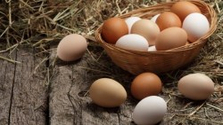 تفسير حلم البيض في المنام لابن شاهين