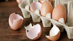 تفسير حلم رؤية قشر البيض في المنام