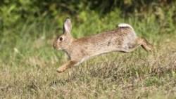 تفسير حلم رؤية الجري وراء الأرانب في المنام