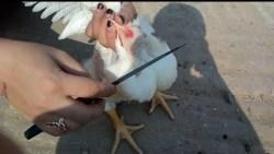 تفسير حلم ذبح الدجاج في المنام لابن سيرين
