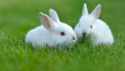 تفسير حلم رؤية أرنب يتكلم في المنام