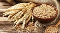 تفسير حلم القمح والشعير في المنام