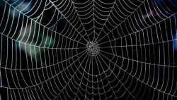 تفسير حلم خيط العنكبوت في المنام