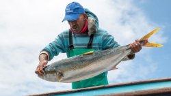 تفسير حلم الصيد في المنام للنابلسي