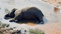 تفسير حلم قتل الفيل وموته في المنام