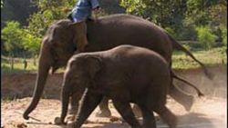 تفسير حلم ركوب الفيل في المنام