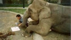 تفسير حلم التحدث مع الفيل في المنام