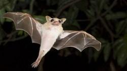 تفسير حلم الوطواط الميت في المنام