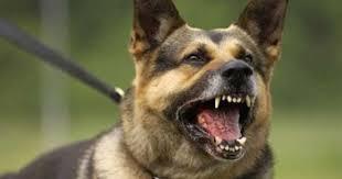 كلب يتصنع الموت حين يمسكه الغرباء + صورة
