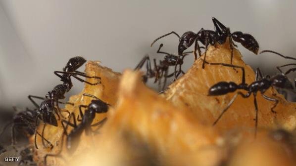 FRANCE-SCIENCE-BIOLOGY-ANTS
