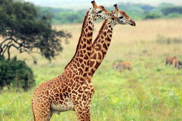 لقطات غريبة لحيوانات التقطت في الوقت المناسب2