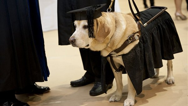 كلب يحصل على درجة الماجستير
