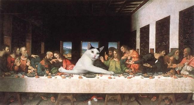 قطة تحرج نفسها تثير ضجة كبيرة على الإنترنت