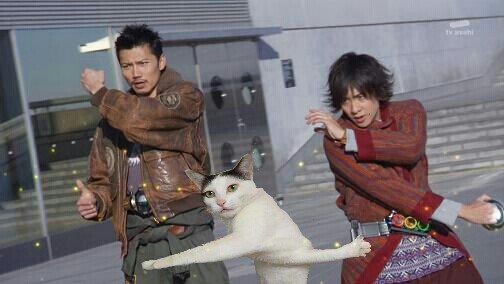 قطة تحرج نفسها تثير ضجة كبيرة على الإنترنت1