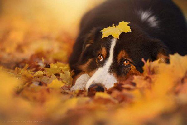 فنانة تلتقط صور مدهشة لكلاب تستمتع بفصل الخريف
