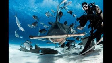 Photo of الاحتباس الحراري يمكن أن يؤدي إلى انقراض 60% من الأسماك
