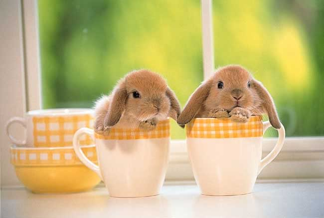Easter bunnies in cups