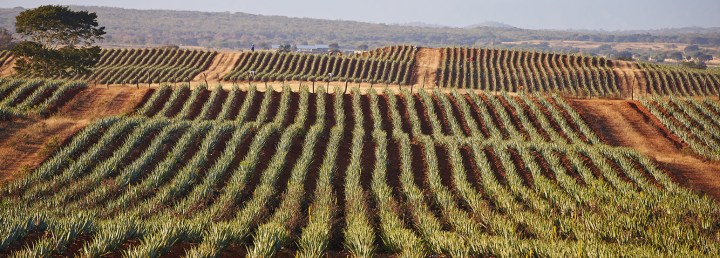 aloe of america largest aloe farm in the world