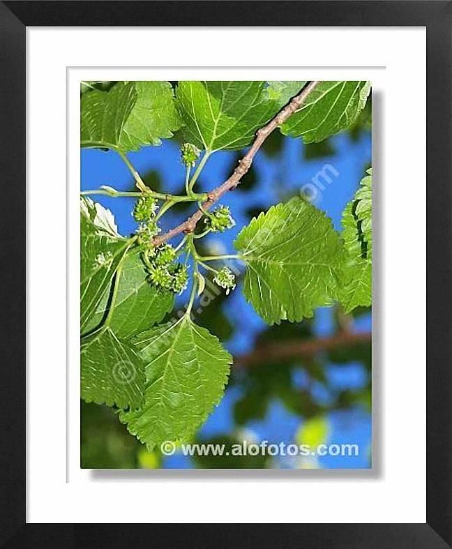 hojas azul y verde en alofotos