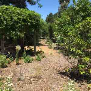Path into the food forest