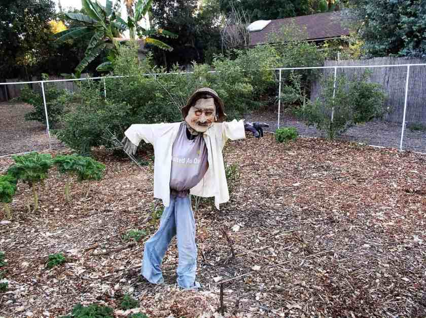 Aloha Farms food forest Scarecrow - scared us more than it did the crows!