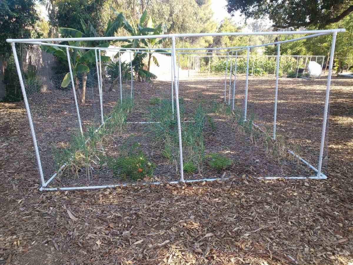 Aloha Farms food forest's Portable Garden Fence of PVC and Chicken Wire
