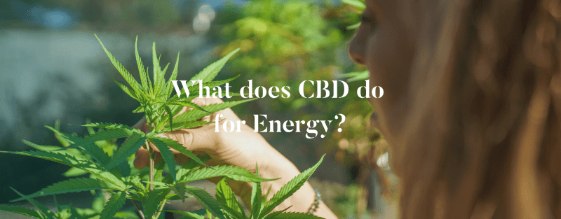 What does CBD do for Energy