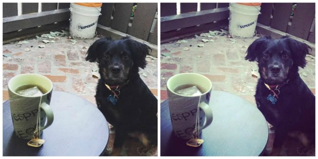 A spot of tea with Hammy. On left, before a filter. On right, with 'Ludwig' Instagram filter.