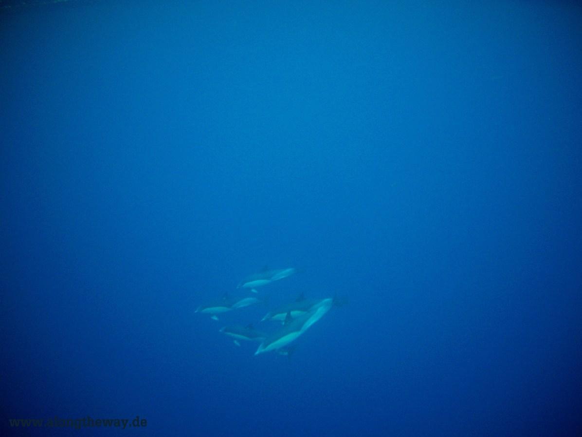 Delphine auf den Azoren. Ein hoch auf Unterwasserkameras.
