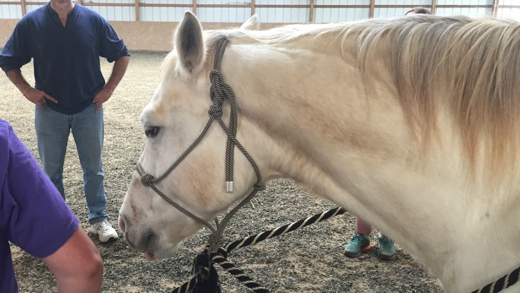 Cody, the horse at the Brain Injury Camp