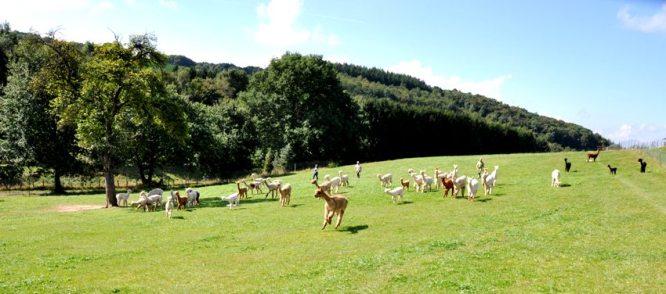 Stutenwiese im Sommer