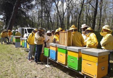 Secondo appuntamento: Gestione degli alveari per la produzione del miele di acacia