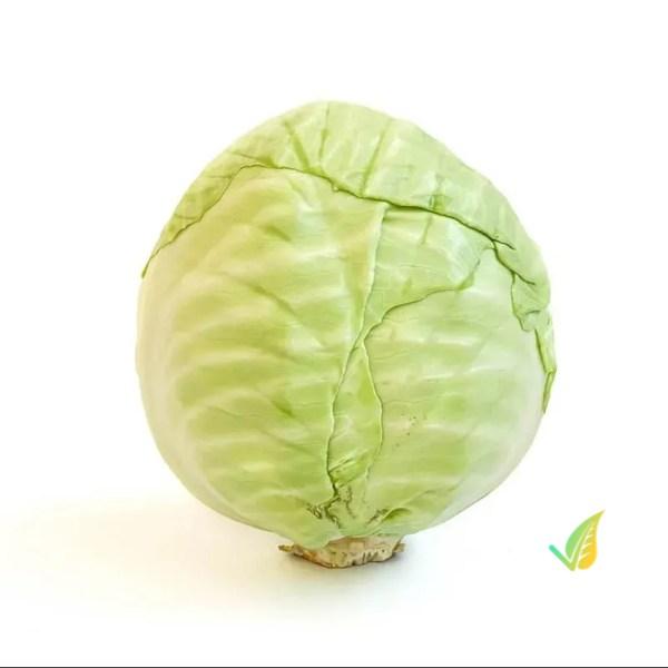 Cavolo Cappuccio Verde