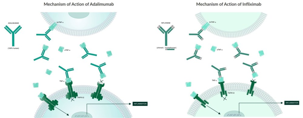 medium resolution of these illustrations depict the mechanisms of action of common tnf alpha blocker mab biologics adalimumab