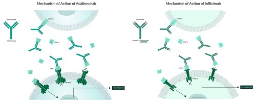 small resolution of these illustrations depict the mechanisms of action of common tnf alpha blocker mab biologics adalimumab