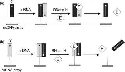 Direct Detection Of Dna By Hybridization Adsorption